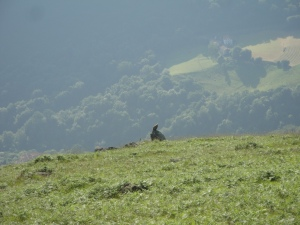 Vulture in the Pyrennes